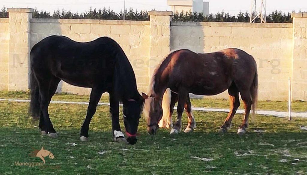 La scelta del cavallo nell'approccio all'equitazione