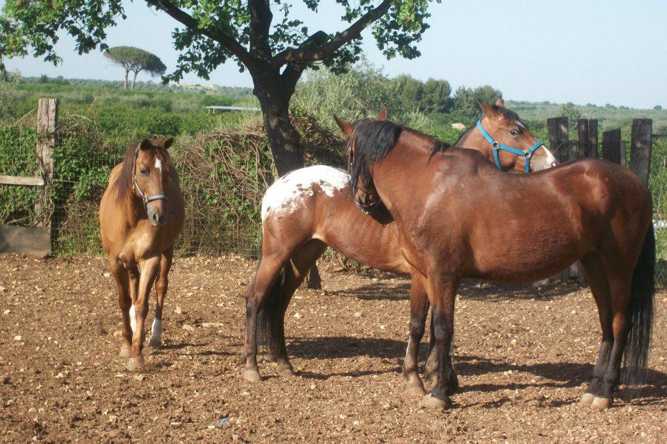 la comunicazione del cavallo